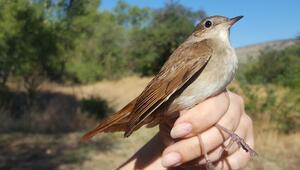 Halkadaki kuş dili