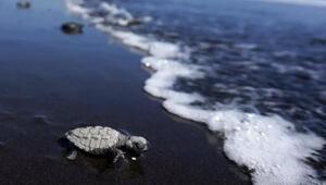 Bilim insanları açıkladı Yeni bir okyanus oluşuyor