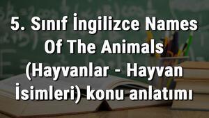 5. Sınıf İngilizce Names Of The Animals (Hayvanlar - Hayvan İsimleri) konu anlatımı