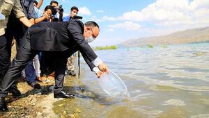 Hazar Gölüne 420 bin yavru siraz balığı bırakıldı