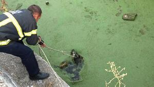 Atık su havuzuna düşen köpeği itfaiye kurtardı