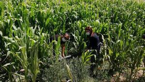 Tarım müdürlüğü personeli iş başında