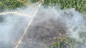Edirnedeki orman yangını 9 saatte söndürüldü