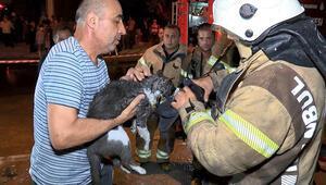 Ataşehirde mermer atölyesindeki yangında kediyi itfaiye kurtardı