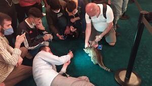 Ayasofyanın dünyaca ünlü kedisine yoğun ilgi Fotoğrafını çekmek için yarıştılar