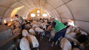 Suriye'de 2800 aileye kurban eti dağıtılacak
