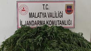 Malatyada, kenevir ekimine 2 gözaltı
