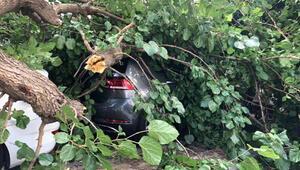 Şişlide çürüyen ağaç dalı 2 otomobilin üzerine böyle devrildi