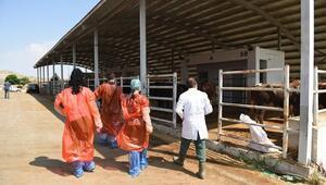 Hayvanlara sağlık taraması