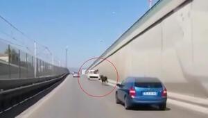 Kaçan boğa, trafikte sürücülere zor anlar yaşattı