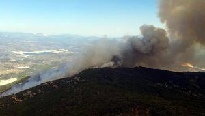 Son dakika haberi: Aydında ormanlık alanda yangın
