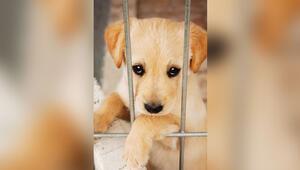 Hayvan Hakları Yasa teklifi neden Meclis'e sunulmuyor Her saat, her gün önemli