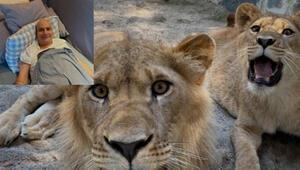 Yavru aslanın adı Mehmet Ali oldu