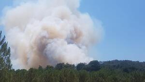 Son dakika... İzmirin Menderes ilçesinde orman yangını