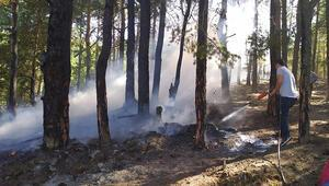 Boluda orman yangını zarara yol açtı