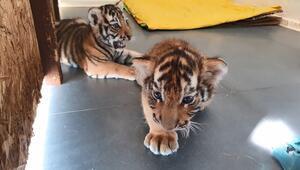 Türkiye'nin ilk büyük kedi parkı: AslanPark
