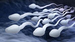 Erkek Kısırlığıyla İlişkili Yeni Bir Gen Tanımlandı