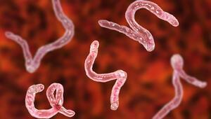 Afrikada sıtmaya yol açan parazitin mutasyonu dirençli çıktı