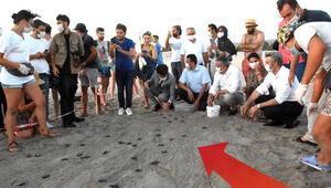 Patara Plajında yavru kaplumbağalar denize gönderildi