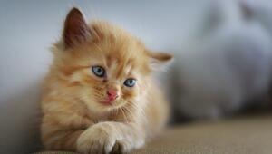 Pandemide kedi sahipleri kendilerini daha az yalnız hissetti