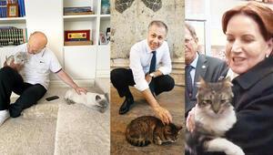 Dünya Kediler Gününde siyasiler de can dostlarını kutladı