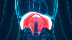 Diyafram yüksekliği nedir Belirtileri ve tedavi şekilleri