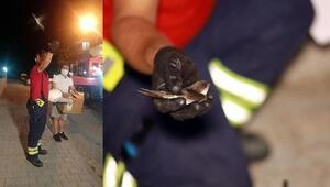 Apartman boşluğuna düşen yavru kırlangıçlar kurtarıldı