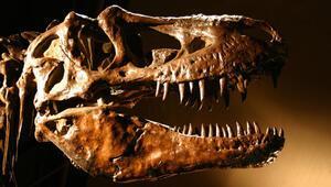 İngilterede T-Rexin kuzeni yeni bir dinozor türü keşfedildi
