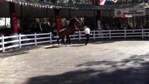 Atın bakıcısını tepme anı kameralara böyle yansıdı