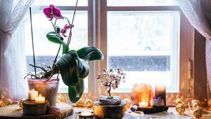 Feng Shuiye Göre Şans Getiren 15 Bitki