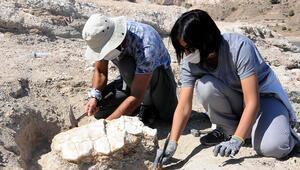Kayserideki ilk kez 7,5 milyon yıllık kaplumbağa fosili bulundu