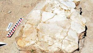 Böylesine ilk defa rastlandı...7,5 milyon yıllık olduğu ortaya çıktı