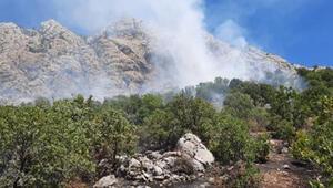 Kahtada orman yangınında fıstık ağaçları da yandı