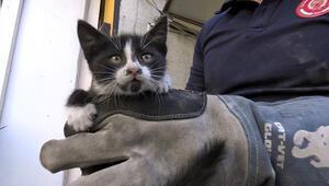 Avcılarda 3 gün asma tavanda mahsur kalan kediyi itfaiye kurtardı