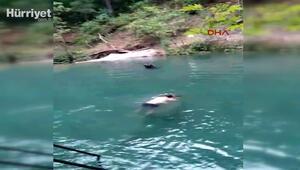 Alanyada doğal havuza atladı, ölümden döndü