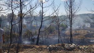 Söndürülmeyen mangal ateşi, ormanı yaktı