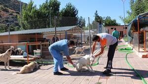 Kozanda sokak hayvanlarına kısırlaştırma çalışması