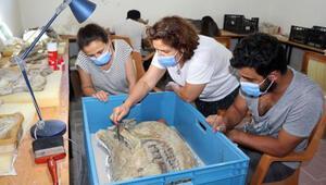 Çankırıda bulunan 8,5 milyon yıllık fosillerin temizliği için titiz çalışma