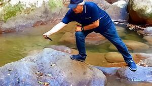 Küre Dağları Milli Parkı'nda, küpeli su yılanı görüldü