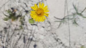 Tuz Gölü Havzasında 72 endemik bitki türü tespit edildi