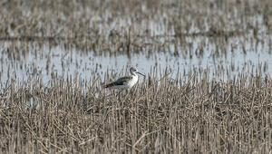 Reyhanlı Barajı kuş cenneti olma yolunda
