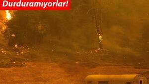 Son dakika haberi: ABDde yangın kabusu büyüyor... OHAL ilan edildi