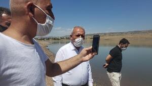 Kalecik Barajına 5 bin sazan balığı bırakıldı