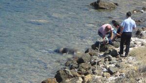 Ayvalıkta sahilde ceset bulundu
