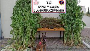 Sakaryada jandarmadan uyuşturucu operasyonu: 14 gözaltı