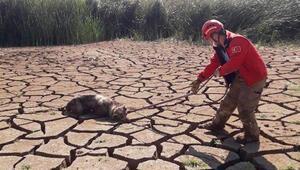 Bataklığa saplanan 2 köpeği itfaiye erleri kurtardı