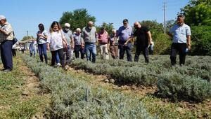 Balıkesir Büyükşehir Belediyesinden, lavanta bahçesine teknik gezi