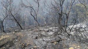 Son dakika haberi: Edremitte zeytinlik alanda yangın paniği