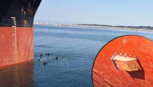 Panama bandıralı gemide ele geçirildi... 50 milyon lira değerinde