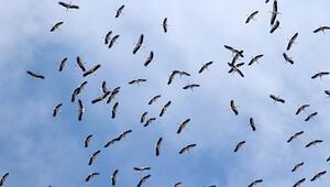 1 milyon leylek, sonbahar göçü için havada